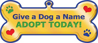 Adopt Today Magnet