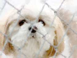 About Shih Tzu & Furbaby Rescue