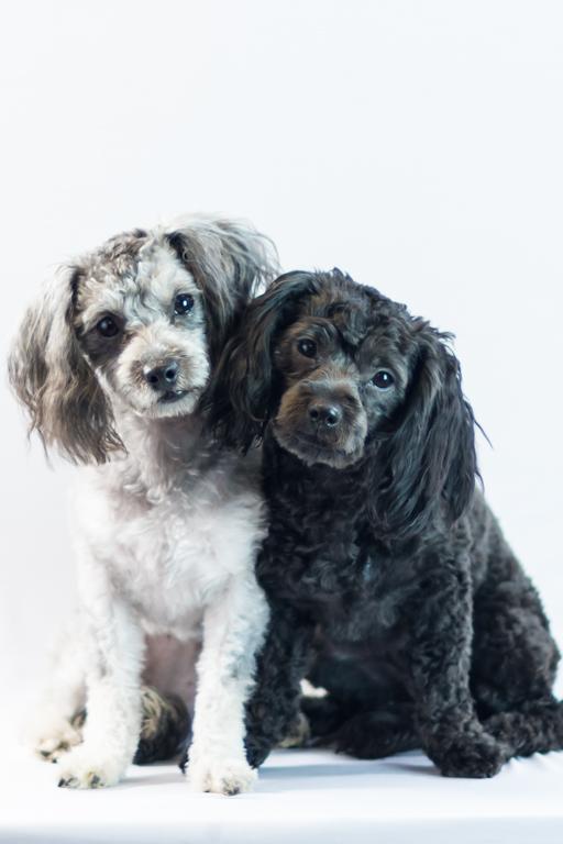 molly and bella 2