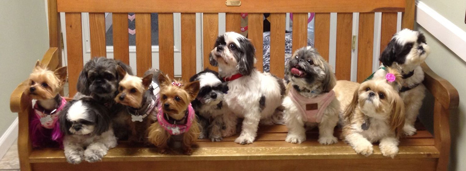 Dogs On A Bench Shih Tzus Furbabiesshih Tzus Furbabies